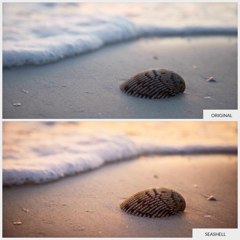 Seashell-BA