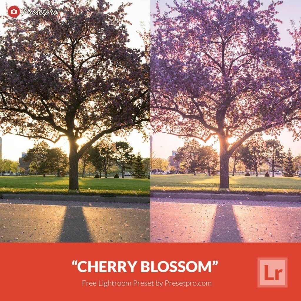 Free-Lightroom-Preset-Cherry-Blossom