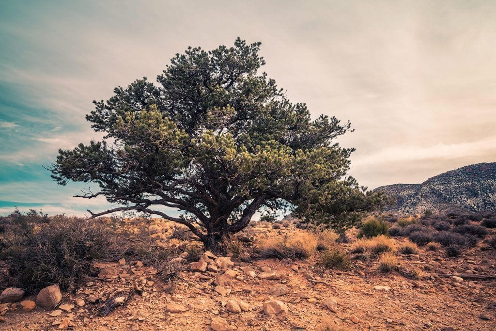 Landscape Photography - Desert-Tree