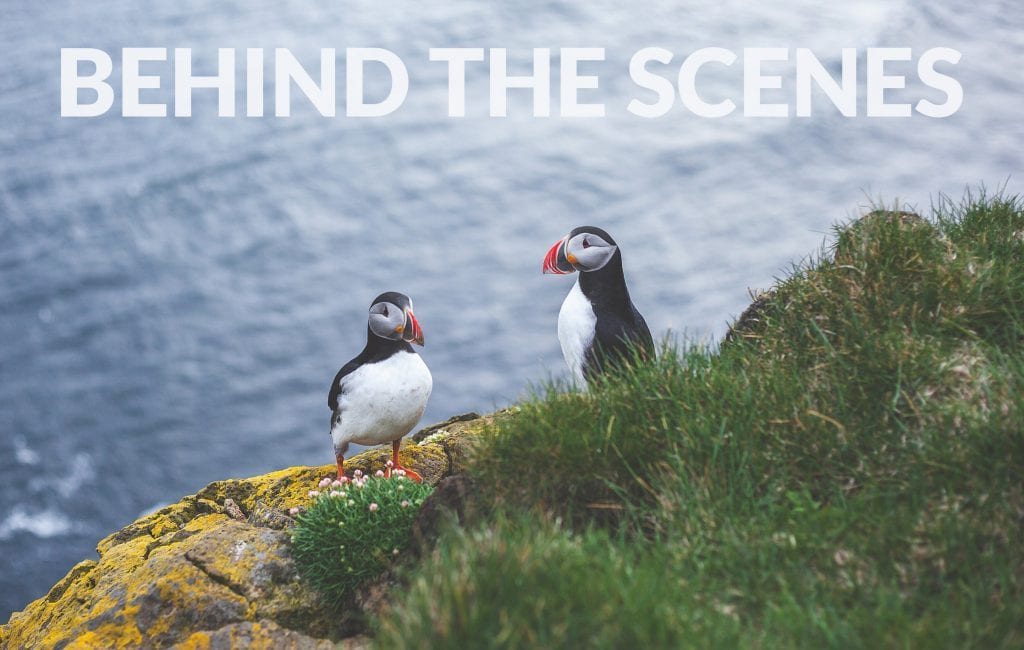 Behind-the-Scenes-Iceland-Puffins